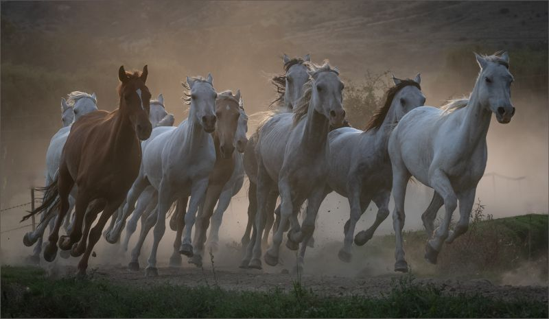 The Spirit Of The Horse, Storme  Renee , South Africa